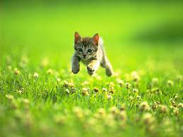 Little kitty jumping in the grass...